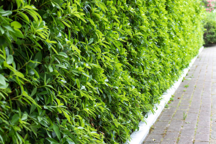 laermschutz-pflanzen