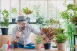pflanzen-gegen-zigarettenrauch