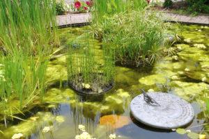 ph-wert-teich-algen