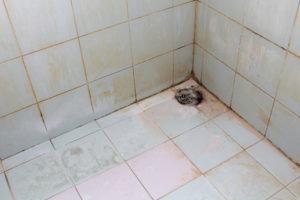roter-schimmel-dusche