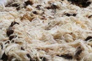 schafwolle-waschen