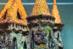 schwarze-algen-im-aquarium
