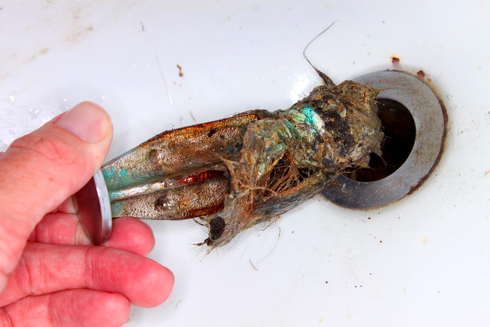 Der würmer toilette in Regenwürmer in
