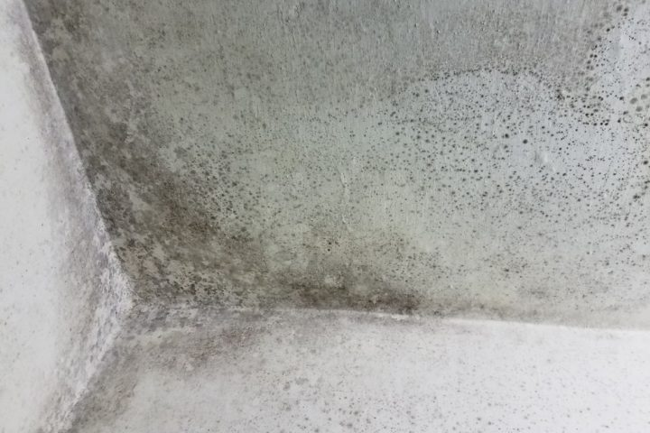 silikatputz-gegen-schimmel
