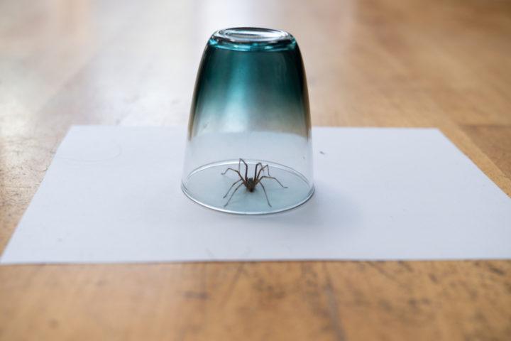 spinnen-vertreiben