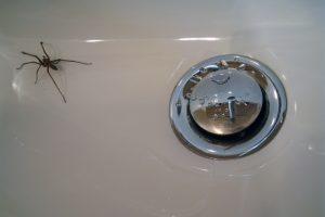 syphon-spinnen
