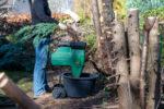 thuja-als-brennholz-giftig