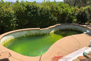 vitamin-c-gegen-algen-im-pool