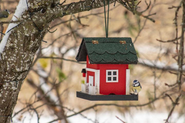 vogelhaus-dach-decken