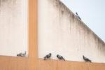 vogelkot-hauswand-entfernen