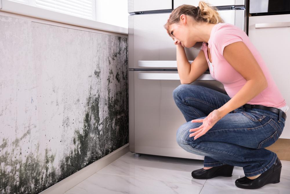 wandheizung gegen schimmel thermo wandheizung mit paroli schimmel vermeiden. Black Bedroom Furniture Sets. Home Design Ideas
