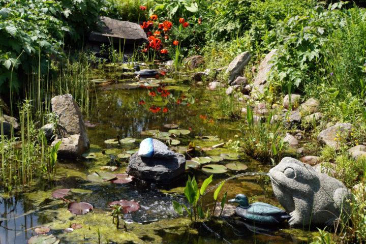 wasserfloehe-gegen-algen