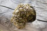 wespennest-gefaehrlich