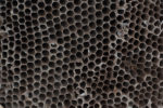 wespennest-gestank