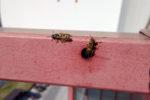 wespennest-im-balkongelaender