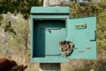 wespennest-im-briefkasten