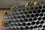 wespennest-im-schuppen