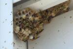 wespennest-rolladenkasten-zukleben