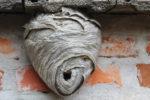 wespennest-vertreiben