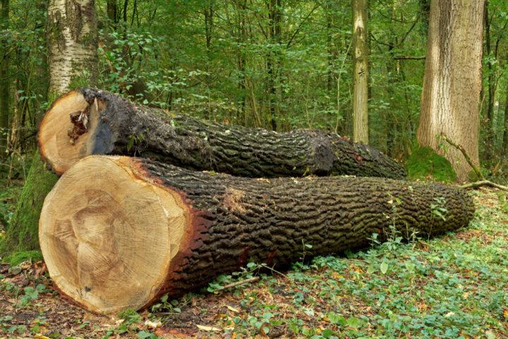 wie-lange-muss-eichenholz-trocknen