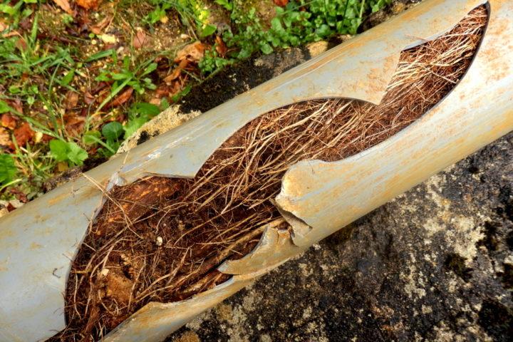 wurzeln-in-abwasserleitung-entfernen
